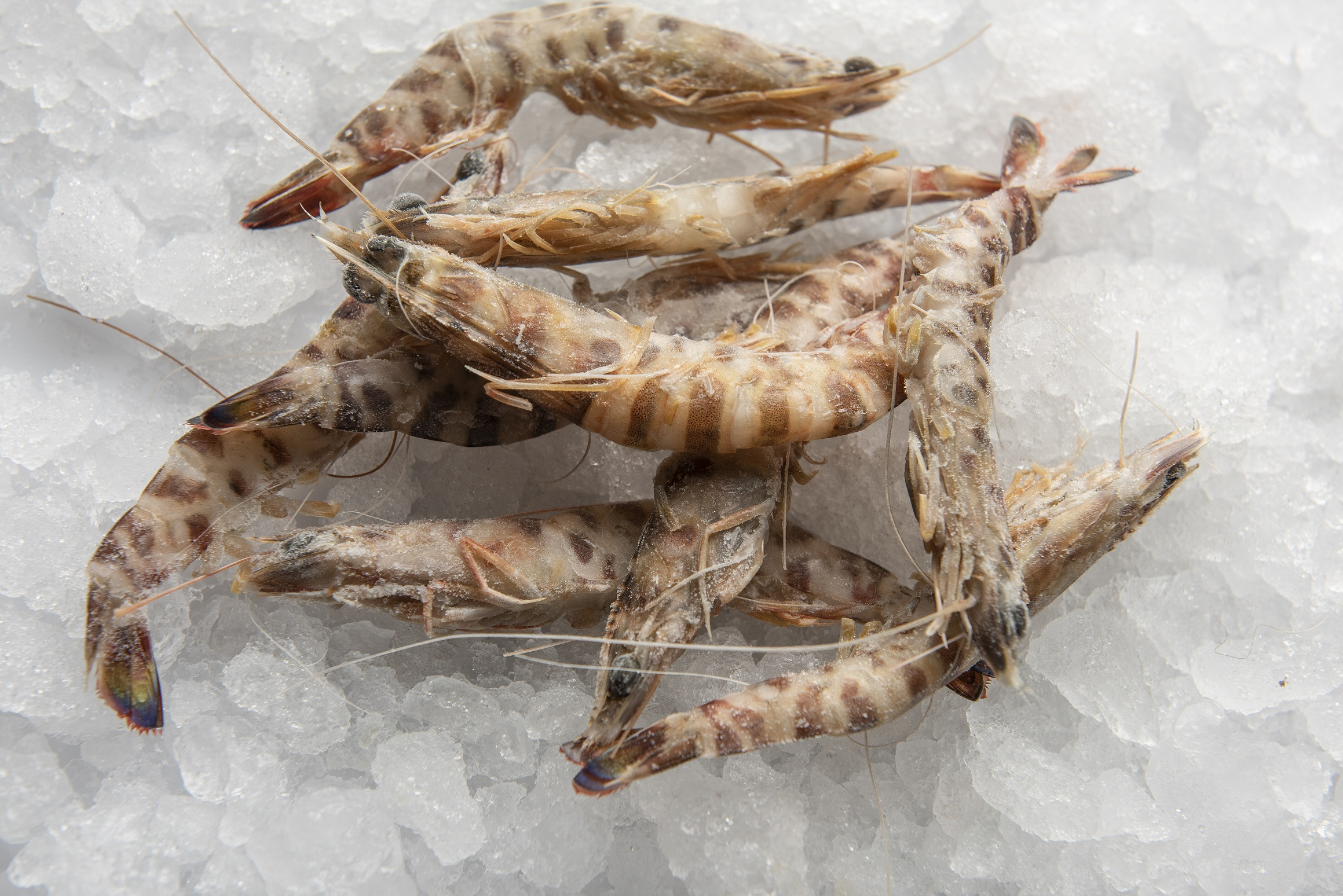 Langostinos cocidos de MARODI